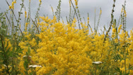 Stock Video Footage of yellow flowers