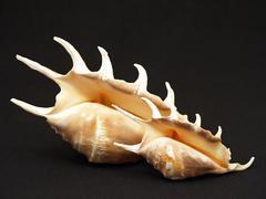 seashells. - stock photo