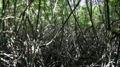 Mangrove Forest jungle center Stock Footage