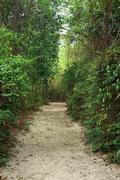 Natural walk path in the garden Stock Photos