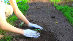 Young woman planting cucumber. Stock Footage
