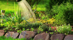 Watering plants. Stock Footage