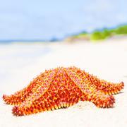 Bright red starfish (sea star) on a beach Stock Photos