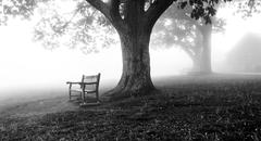 benches and trees in fog, behind dickey ridge visitor center in shenandoah  - stock photo