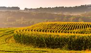 Stock Photo of corn fields and view of distant hills in rural york county, pennsylvania.