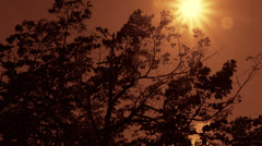 Camera track trees red sun Stock Footage