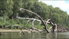 Snag, river Stock Footage