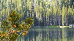 lake tenaya pines - stock footage
