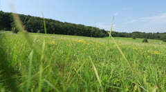 Meadow in hilly landscape Stock Footage
