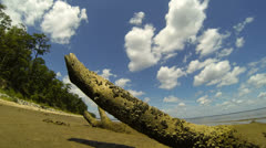 timelapse of clouds over driftwood - stock footage