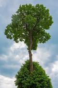 Sky tree Stock Photos