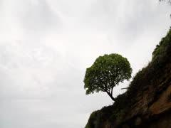 Tree on hillside - stock footage