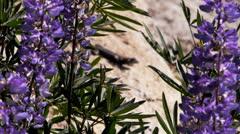 lizard on rock - stock footage