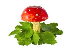 Stock Photo of fly agaric mushrooms among leaves