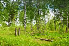 forest glade with fallen trees - stock photo