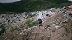 Dog alone in trash dump Stock Footage