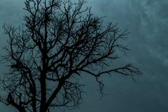 Stock Photo of a tree silhouette