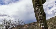 Stock Video Footage of 4K 30p - Saguaro cactus tagged with graffiti slider time lapse storm cloud ridge