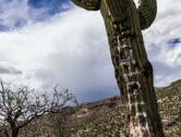 Stock Video Footage of 4K 24p - Saguaro cactus tagged with graffiti slider time lapse storm cloud ridge