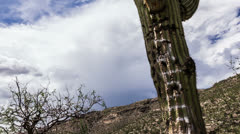 HD 30p - Saguaro cactus tagged with graffiti slider time lapse storm cloud ridge Stock Footage