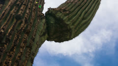 HD 24p tight - Saguaro Cactus circular from base upshot time lapse with clouds - stock footage