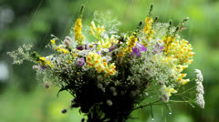 Wildflowers in the garden in the rain(close-up) Stock Footage