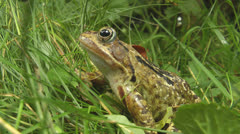 Toad sitting in garden Stock Footage