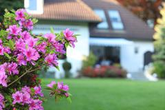 magenta azaleas in a private garden - stock photo