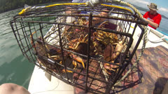 Recreational Crab fishing Stock Footage