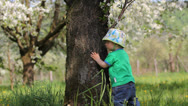 Stock Video Footage of Funny baby playing hide and seek behind blossom tree in  a meadow