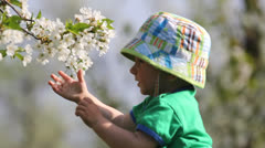 Baby playing with branch with cherry flowers from blossom tree Stock Footage
