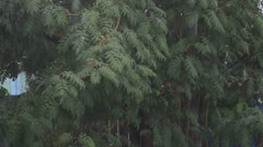Bad weather. Heavy rain and hail Stock Footage