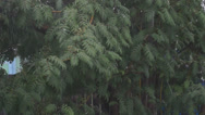 Stock Video Footage of Bad weather. Heavy rain and hail