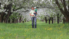 Father holding baby in his arm walking on blossom orchard alley  - stock footage