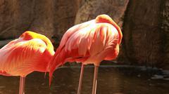 Pink flamingos flamingoes! Stock Photos