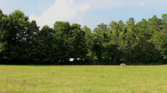Lone white mule in pasture Stock Footage