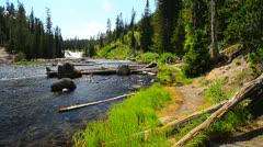 River Through Yellowstone Stock Footage