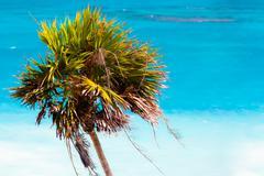 palmtree - stock photo
