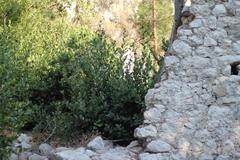 Ancient Cities of Olympos and Antalya Stock Photos