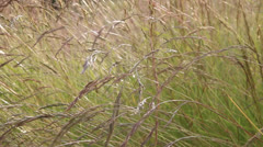 Grass in breeze - stock footage