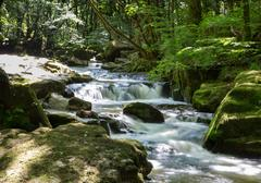 Golitha Falls River Fowey Bodmin Moor tourist attraction - stock photo