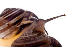 Crawling snails Stock Photos