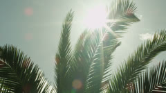 Looking at Sun through Palm Tree Leaves at Sunset Time 4K. Stock Footage