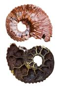 two sides of mineral fossil ammonite shell - stock photo