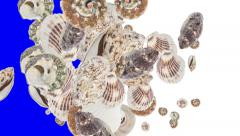 Falling Shells (with alpha channel) Stock Footage