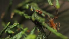 Garden Spider Macro HD Stock Footage