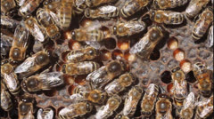 Dance bees Stock Footage