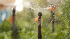 Garden watering irrigating irrigation seedling garden gardening green organic - stock footage