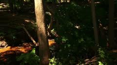 Upper Huron River - panning shot Stock Footage
