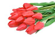 Stock Photo of red tulips
